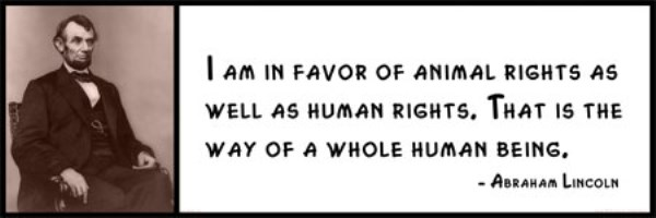 Animal Rights Quotes Unique Wall Quote Abraham Lincoln  I Am In Favor Of Animal Rights As